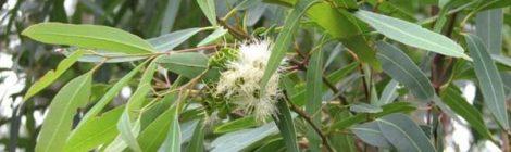 Gordiano Lupi - Il parco degli eucalipti