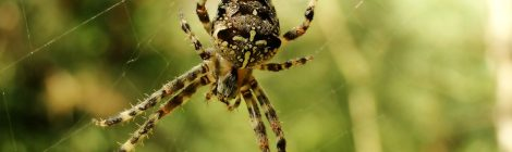 Francesco De Luca - Doccia di ragni