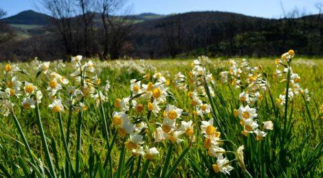 """Nadia Cortese - """"Ossessione di primavera"""""""